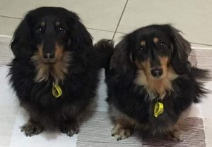 carla-beljaars-pets
